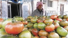 بائع ثمار الطماطم الرامسي